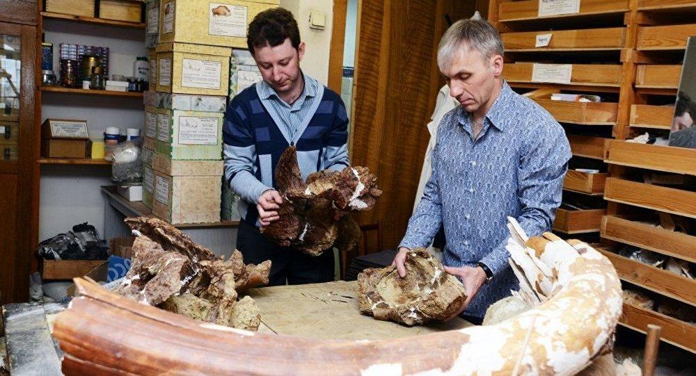 Investigadores rusos han hallado una especie completamente nueva de dinosaurios herbívoros.