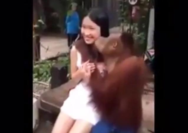 Orangután romántico se enamora de una turista