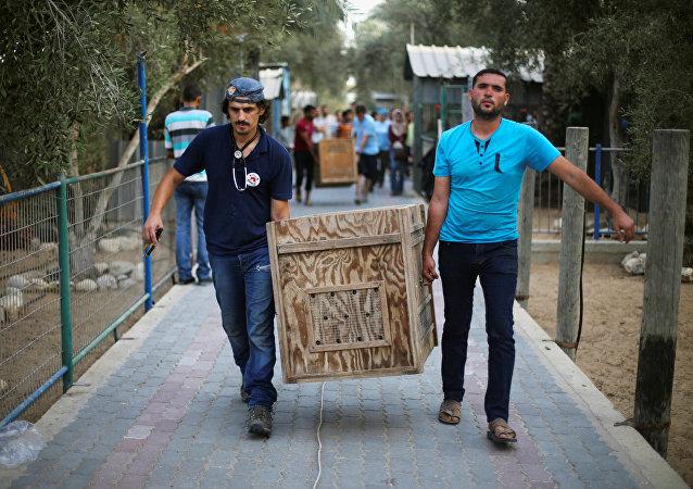 El contenedor con un animal deñ zoo de Gaza