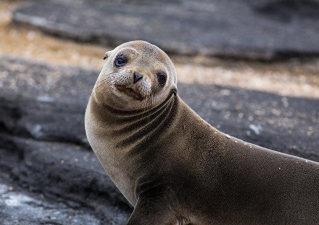Una foca (archivo)