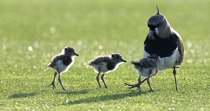 Una mamá pájaro y sus polluelos