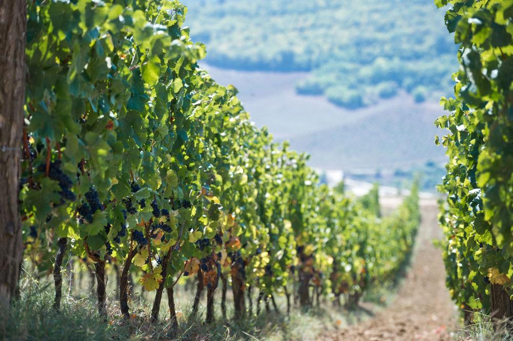 Los viñedos de la bodega 'UPPA Winery' ocupan 16 hectáreas en la parte sur de la montaña Zybuk-Tepe. Este pintoresco lugar es uno de los mejores de la región para crear vinos finos y elegantes.