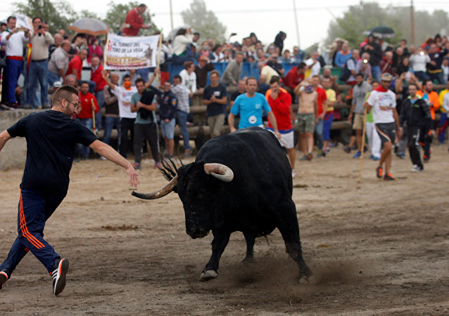 Toro de la Peña