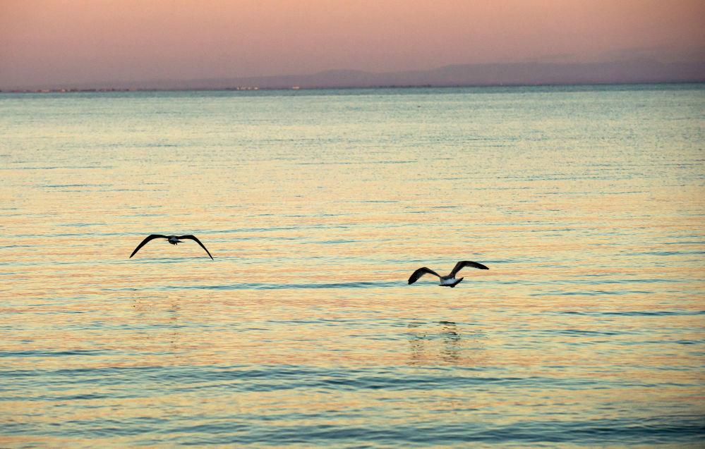 Gaviotas sobrevuelan la bahía de Kalamita al oeste de la península de Crimea.