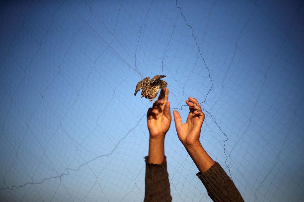 Hombre captura codornices en una playa en la ciudad de Jan Yunis, al sur de la Franja de Gaza.