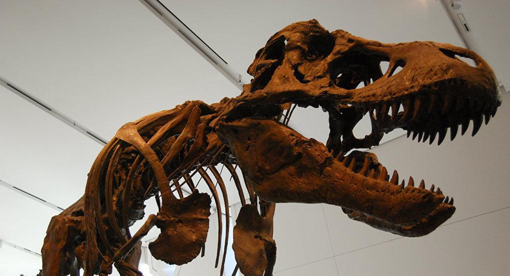 Esqueleto de dinosaurio de 150 millones de años será subastado ...