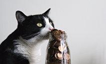 Un gato con dinero