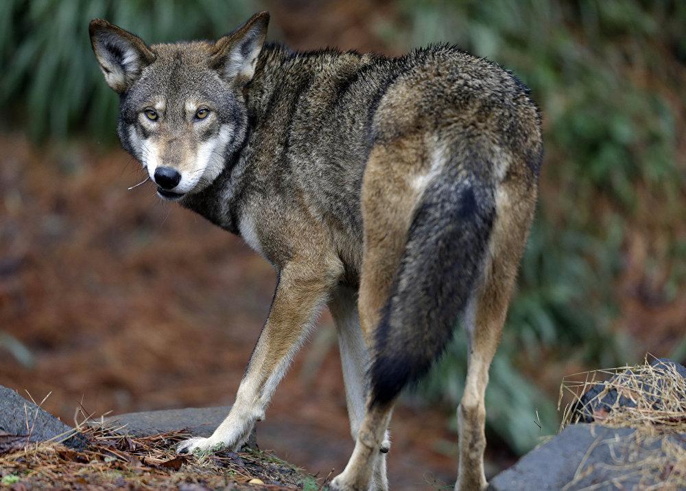En peligro de extinción: los animales más raros del mundo