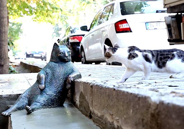 Turquía erige una estatua en honor al gato más vago de las redes sociales