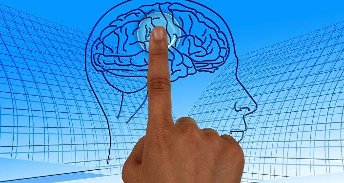 Un cerebro humano