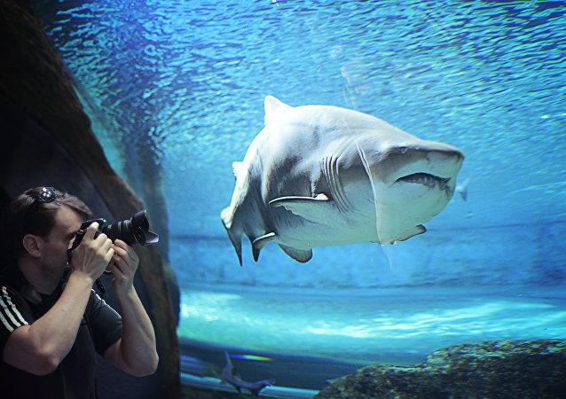 En un acuario
