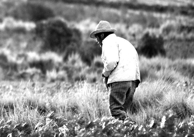 Campesino boliviano
