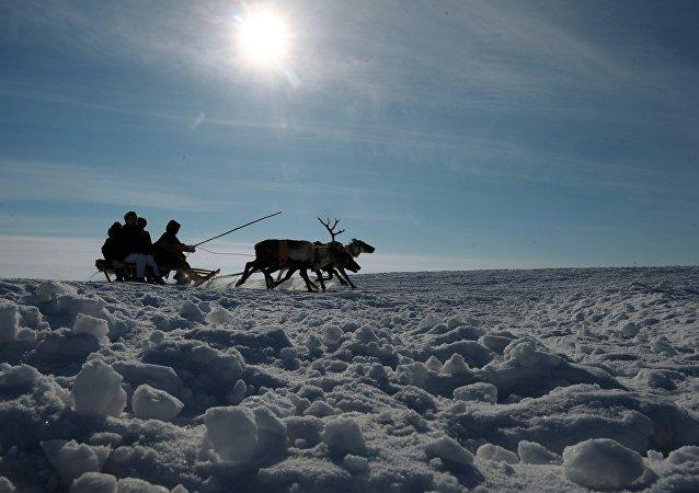 Los nenets de Yamal (archivo)