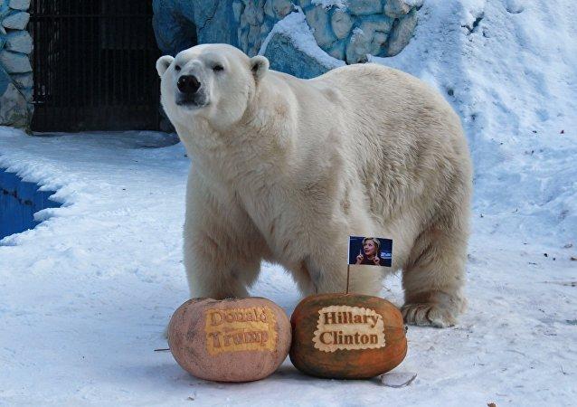 El oso polar Félix