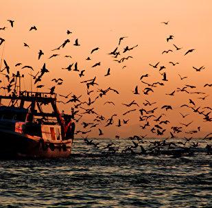 Un barco pesquero (imagen referencial)