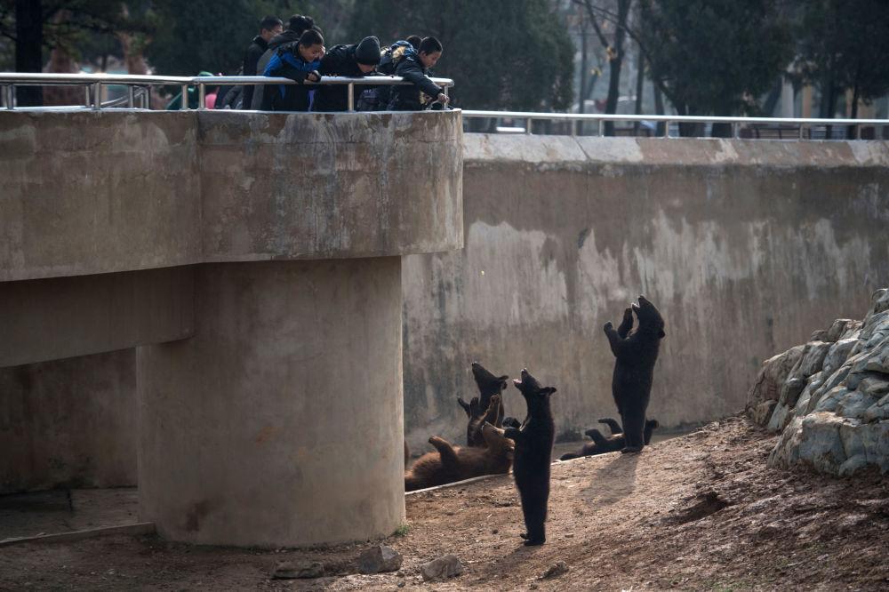 Los niños dan de comer a los osos en el zoológico de Pyongyang