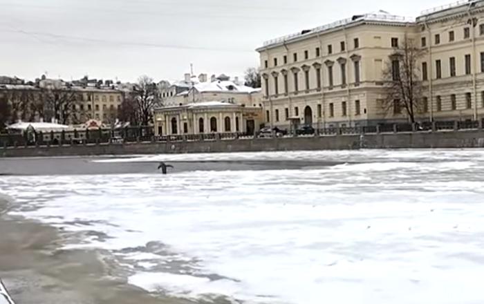 Un misterioso pingüino 'se cuela' en San Petersburgo