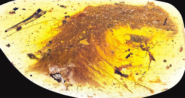 La cola de un pequeño dinosaurio en una piedra de ámbar