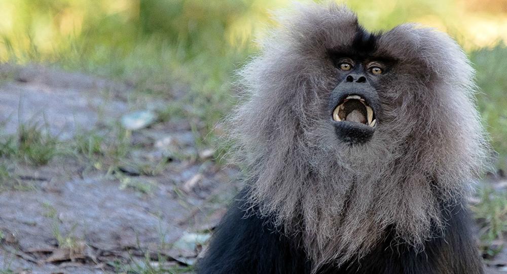Un macaco