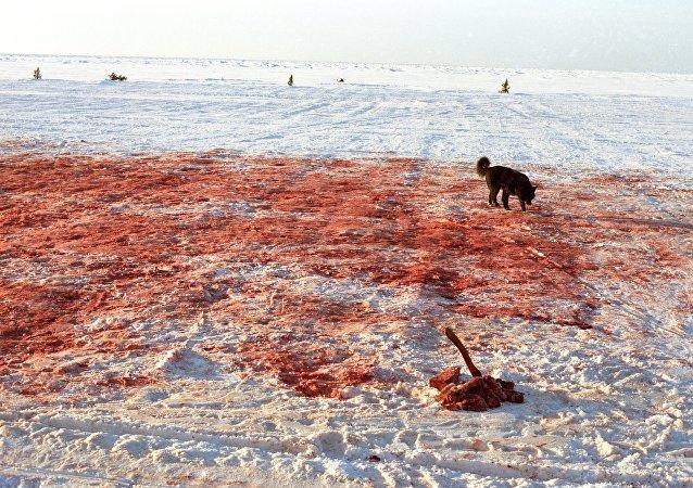 Sangre en la nieve