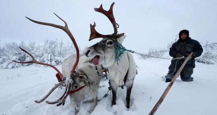 La vida en el Ártico ruso