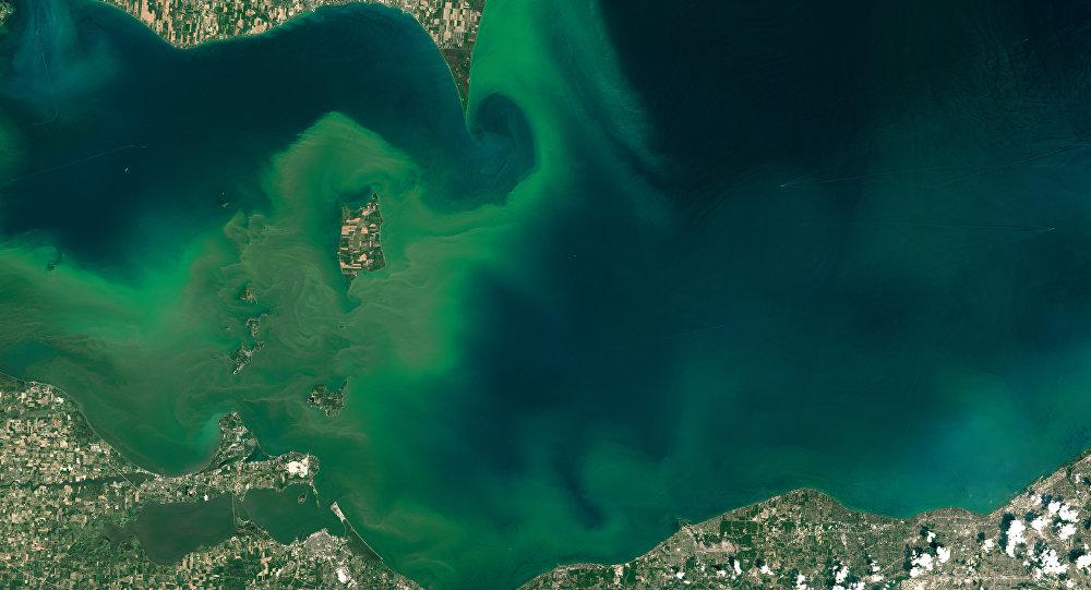 Epidemia de algas venenosas en EEUU