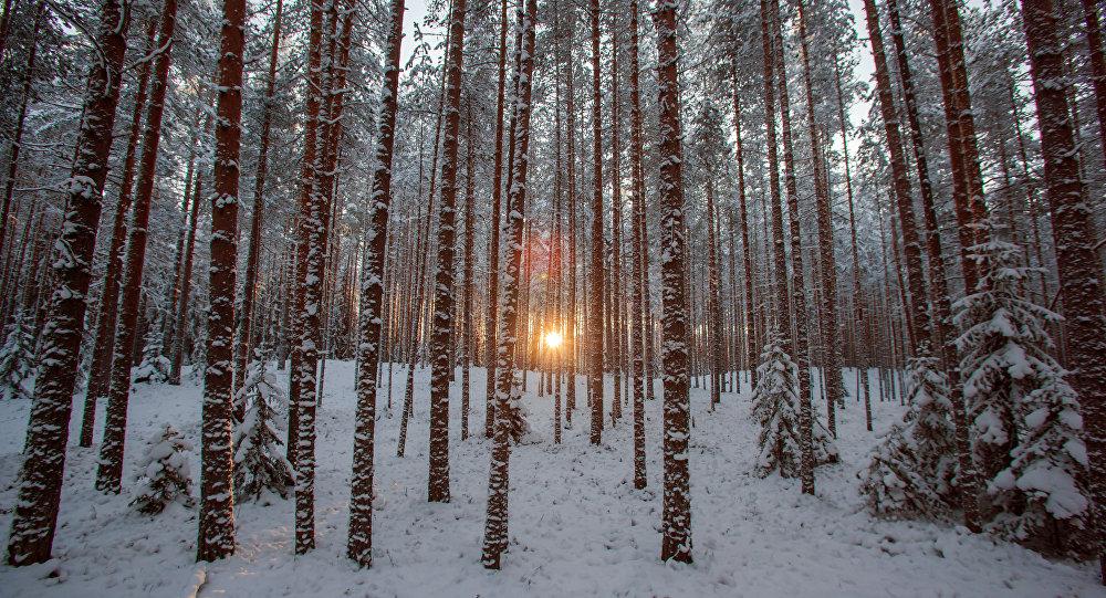 El bosque invernal
