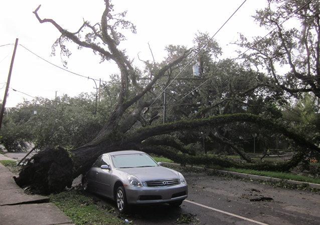 Un árbol caído sobre un auto (archivo)