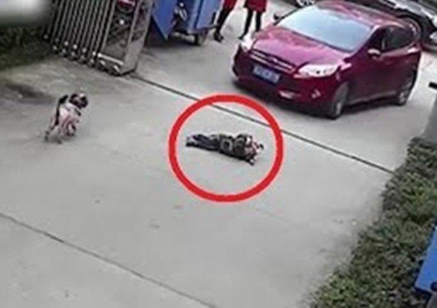 Niño sale ileso después de ser atropellado por un auto