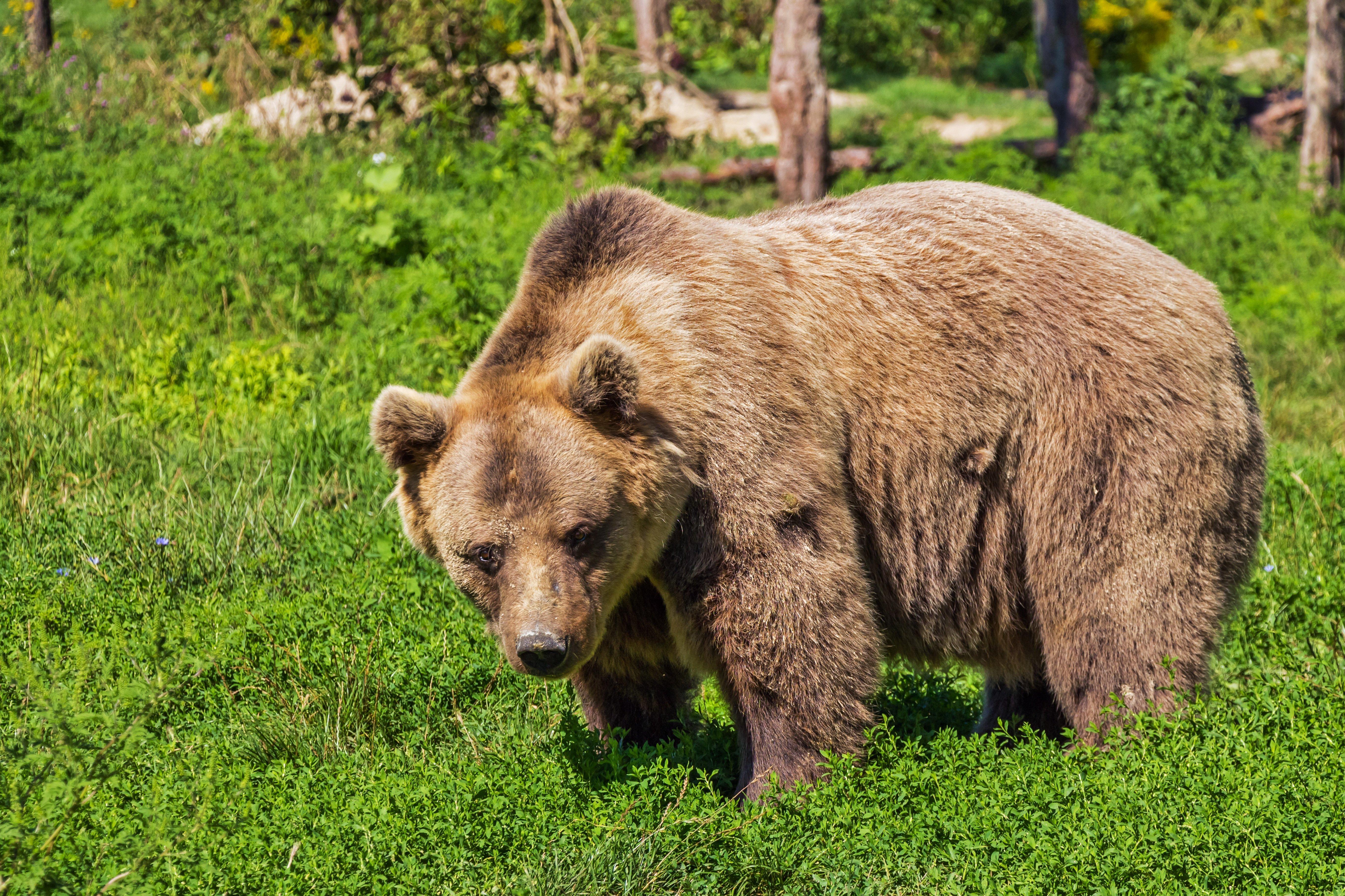 De acuerdo con un científico del Reino Unido, los osos son los candidatos con las mayores probabilidades de convertirse en los 'amos' de la Tierra