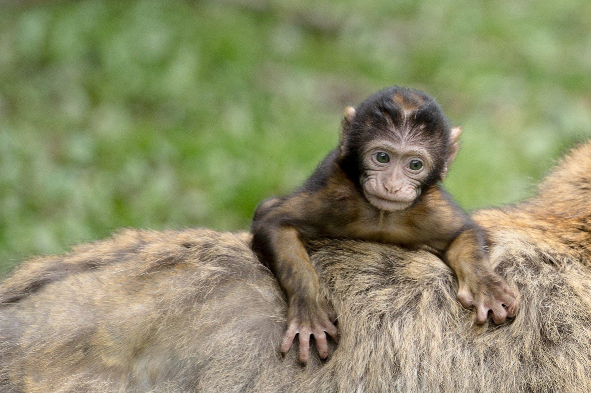 La comunidad de los monos muestra señales de una compleja jerarquía que es digna de competir con la de los humanos
