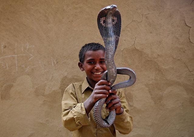 Encantadores de serpientes: una especie en peligro de extinción
