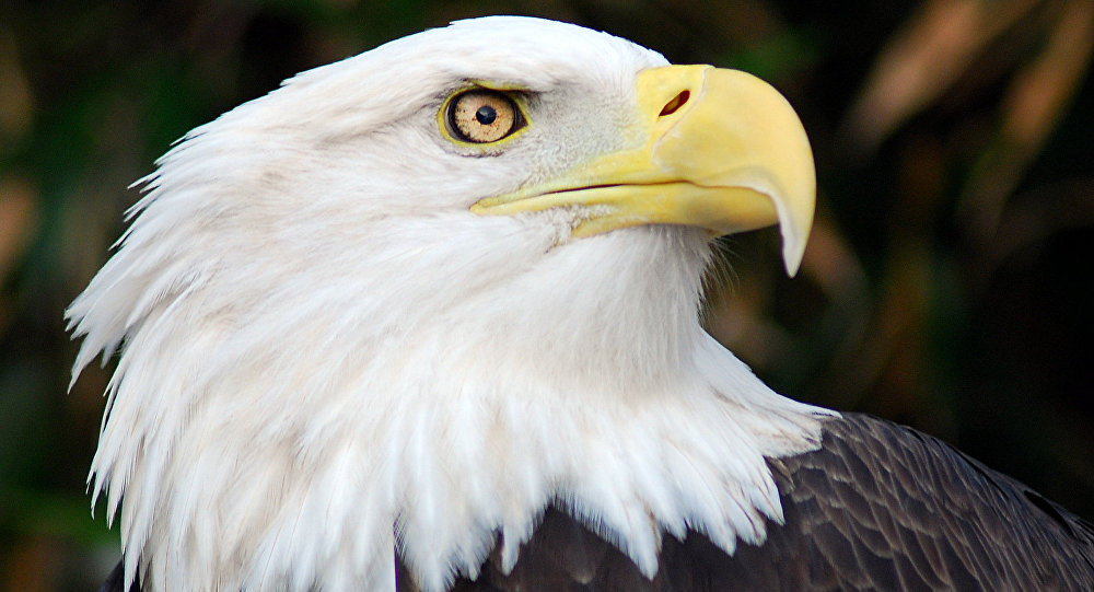 Águila real \'ensimismada\' con su reflejo se convierte en meme en ...