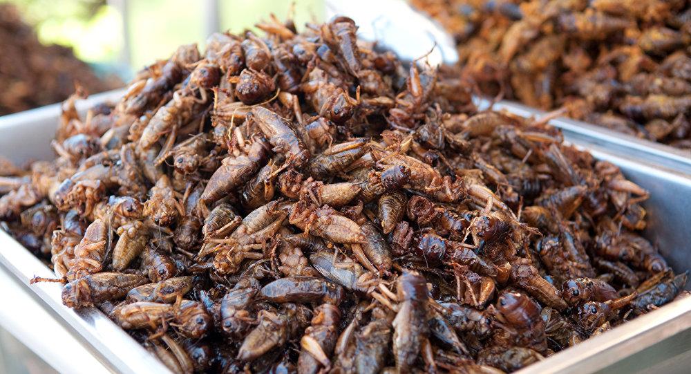 Cucarachas comestibles