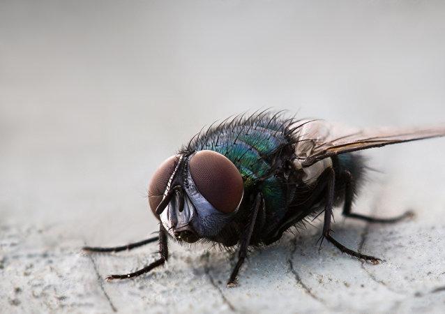 Una mosca (archivo)