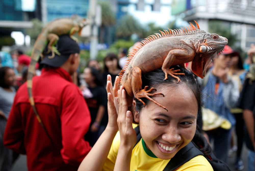 Una mujer con una iguana durante la reunión del club de los aficionados de reptiles en Yakarta, Indonesia
