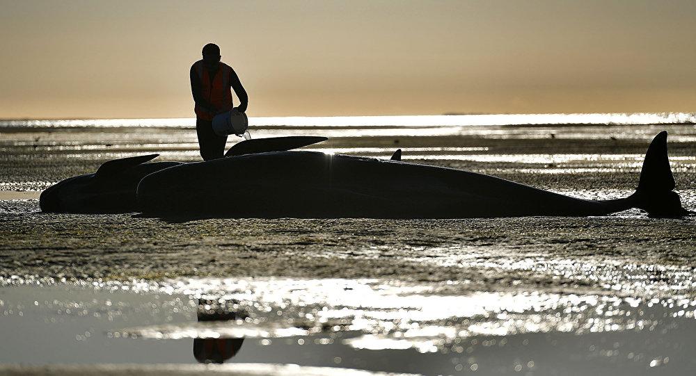 Una ballena encallada en una playa