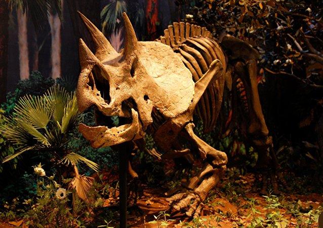 El esqueleto de un dinosaurio (imagen referencial)