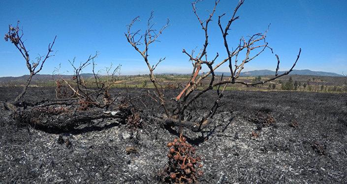 Consecuencias de incendios forestales en Chile