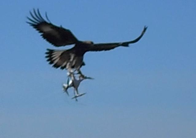 Águilas, las nuevas armas de defensa antidrones de Francia