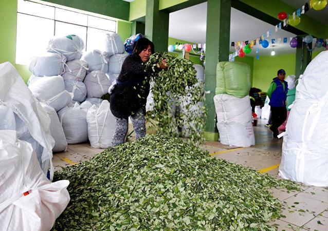 Las hojas de coca en el mercado en La Paz (archivo)