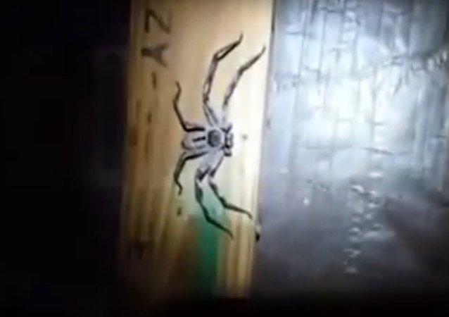 Una enorme araña