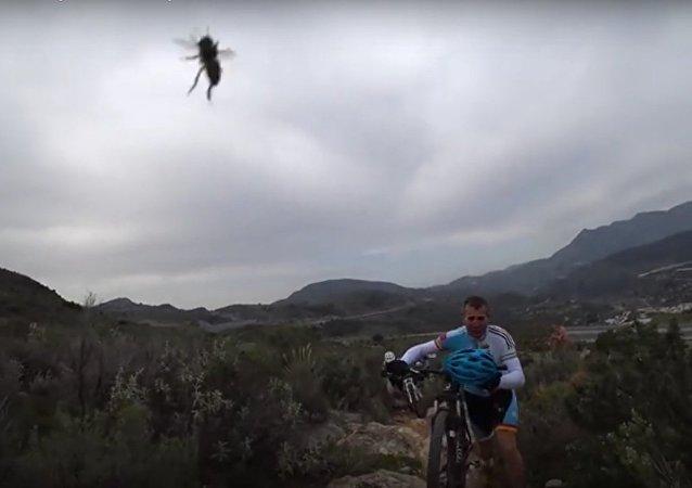 Captura de pantalla del momento en el que los ciclistas fueron atacados por abejas