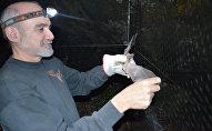El doctor Rodrigo Medellín sostiene un murciélago