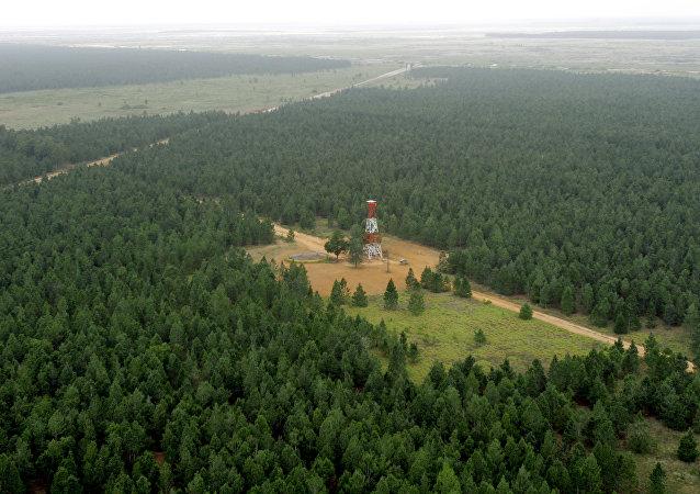 Venezuela posee el bosque forestal más grande del mundo, creado por el hombre