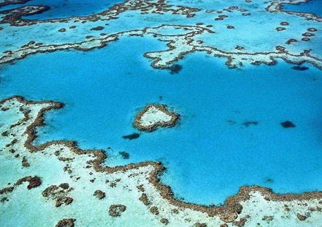 Un arrecife coralino (archivo)