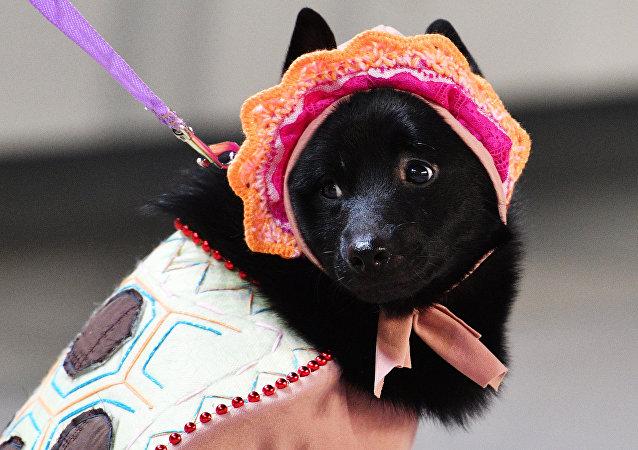 Perro (imagen)