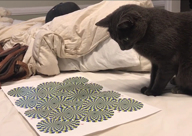 Una ilusión óptica vuelve loco a un gato