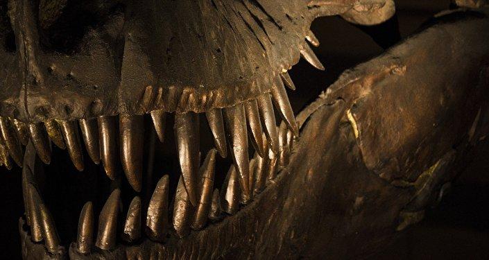 ¡Mira qué dientes! Científicos presentan nueva especie de monstruo marino (fotos)