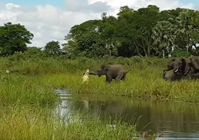 La emocionante pelea entre un elefante y un cocodrilo